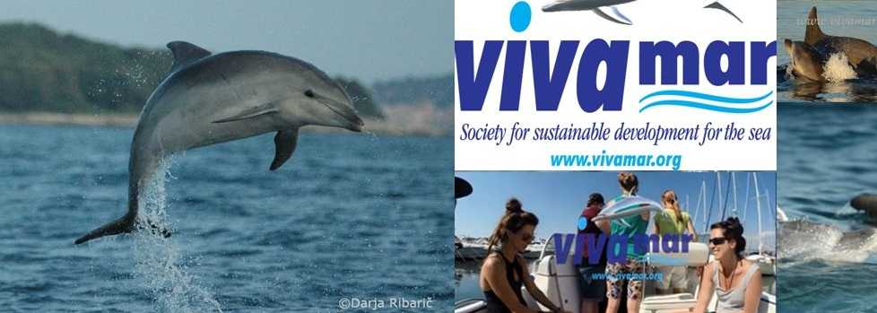 Volunteer with Vivamar, Bottlenose Dolphin Research