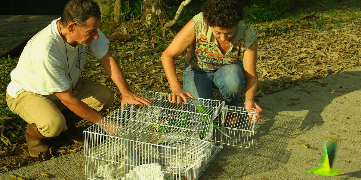 Volunteer with FreeWildlifeBrazil Celine