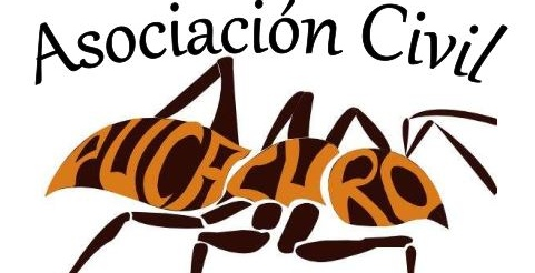 Volunteer with Asociación Civil PUCACURO