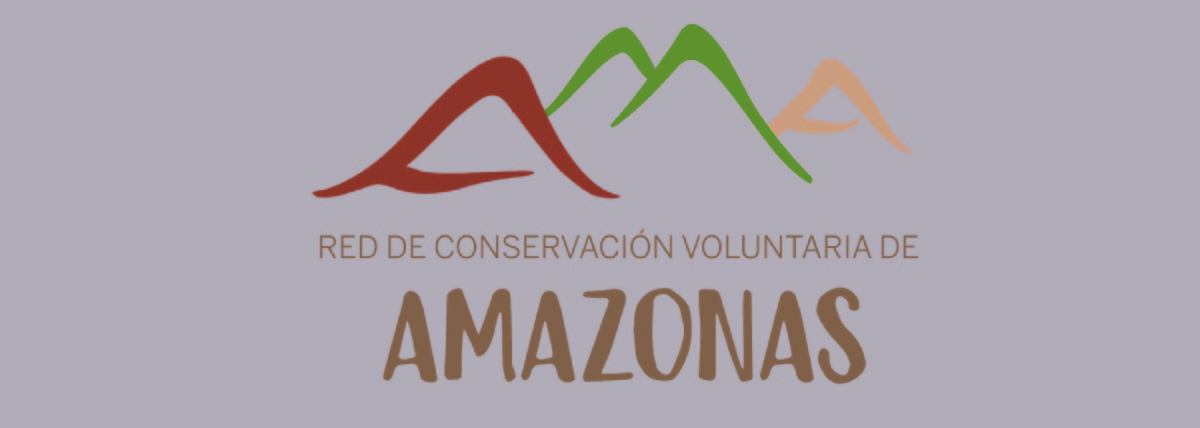Volunteer with Red de Conservación Voluntaria de Amazonas