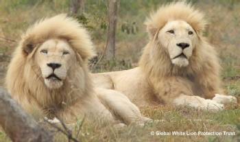 Volunteer with White Lion Protection Trust