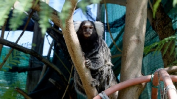 Volunteer with International Primate Rescue