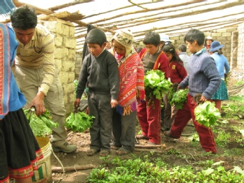 Volunteer with Andean Alliance for Sustainable Development