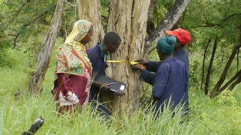 Volunteer with Mpingo Conservation and Development Initiative