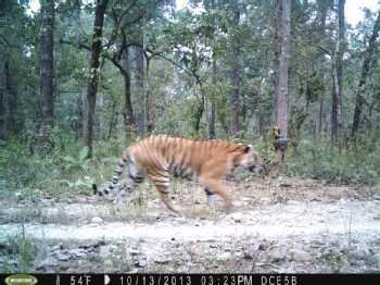 Volunteer with Nepal Tiger Trust