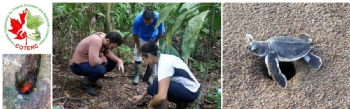 Volunteer with COTERC - Caño Palma Biological Station