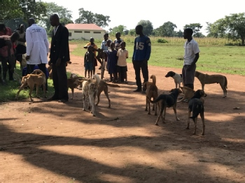 Volunteer with Bam animal clinics