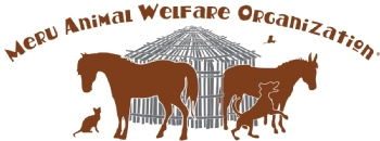Volunteer with Meru Animal welfare Organization