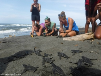 Volunteer with La Tortuga Feliz